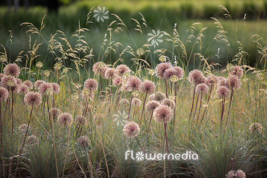 Allium with grasses (112898)