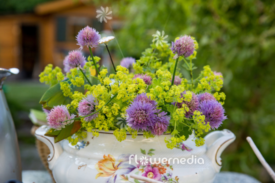 Bouquet of chive and lady's mantle (112889)